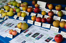 Appleby Events: Appleby Apple Day